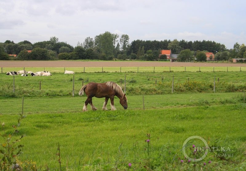 На лугах Фландрии